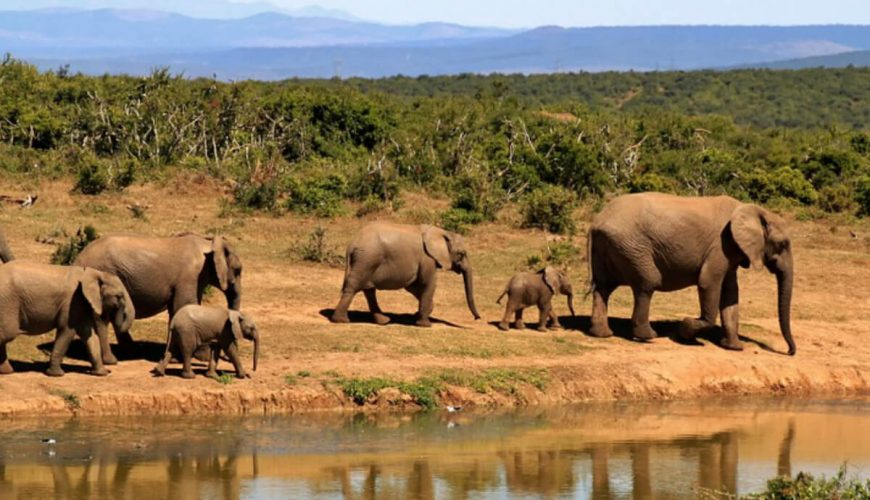 Hwange national park tour packages