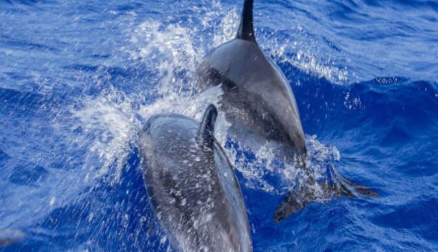 dolphin watching